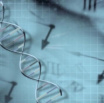 Обнаружены «мутационные таймеры», программирующие старение клеток