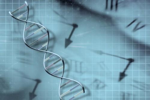 Таймер ДНК