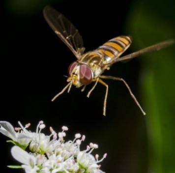 В деле опыления полей важны нетолько пчёлы