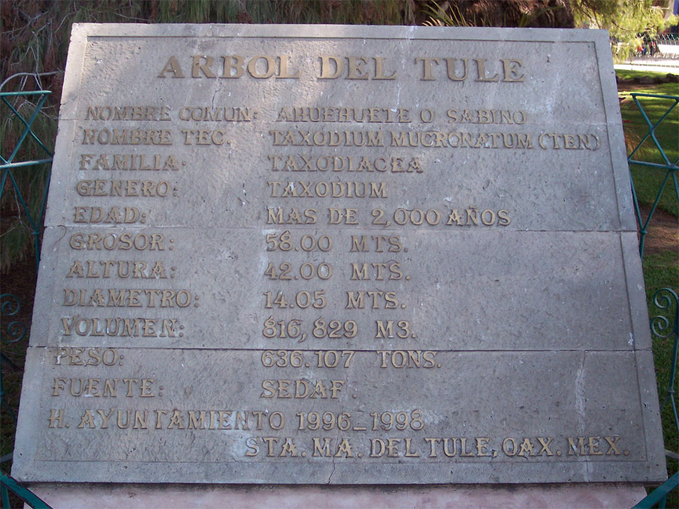 Табличка уДерева Туле