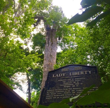 В США начато клонирование одного из старейших деревьев мира