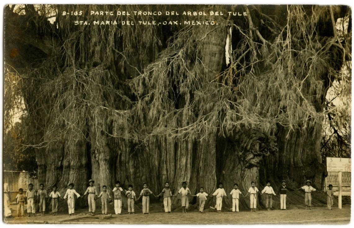 Дети возле Дерева Туле