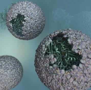 Учёные поместили бактериальный фермент внутрь вирусной оболочки, создав «нанореактор» для производства топлива