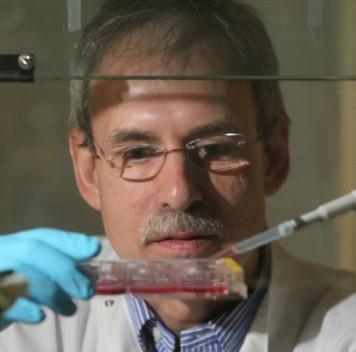 Активность ферментов митохондрий клеток кожи снижается свозрастом