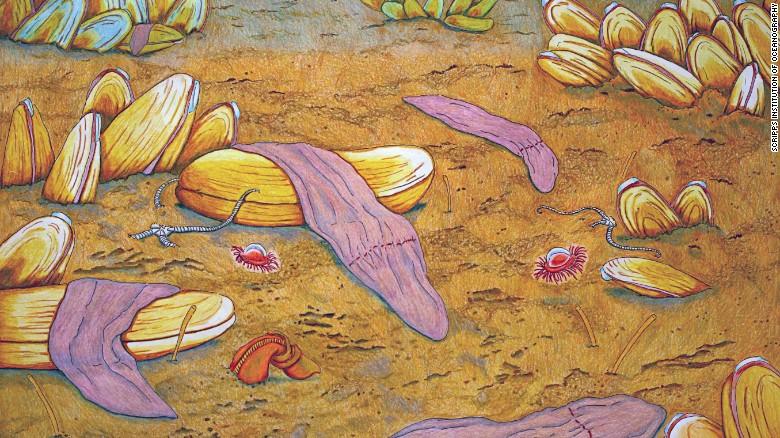 """Глубоководный """"фиолетовый носок""""— <i>Xenoturbella monstrosa</i>."""