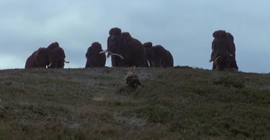 Кульминация фильма, Нао пытается подружиться смамонтом.