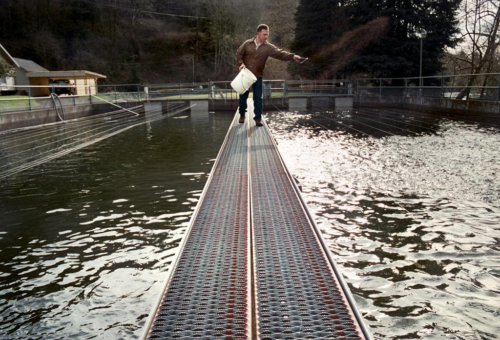 Инкубатор лососёвых рыб вТилламуке, штат Орегон, США.