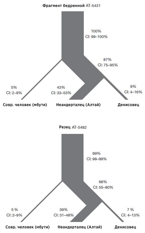 Процент продвинутых аллелей, совпадающих угоминид Сима де лос Уэсос сгеномами современного человека, неандертальца иденисовца.