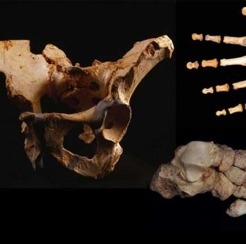 Расшифрована ДНК гейдельбергского человека из Испании