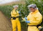 ГМО давно и прочно заняли место в сельском хозяйстве