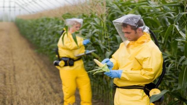 """<abbr lang=""""ru"""" title=""""Генетически модифицированные организмы"""">ГМО</abbr> давно ипрочно заняли место всельском хозяйстве."""