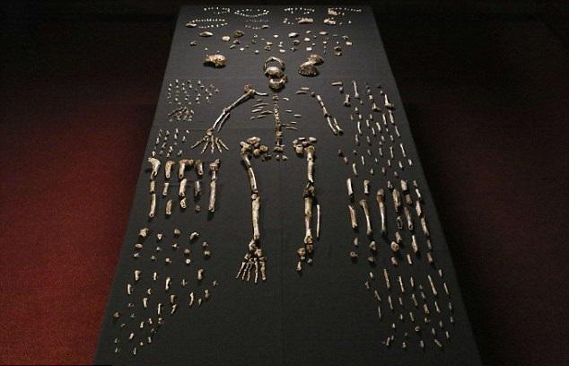 Останки Homo naledi из пещеры «Rising Star».