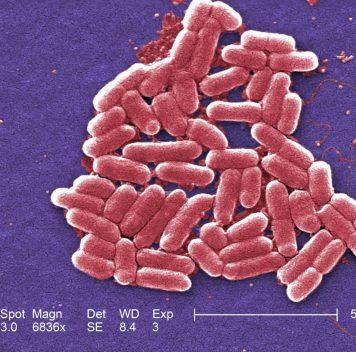 Потенциальная мишень для нового поколения антибиотиков