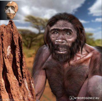 Homo naledi:  погребений небыло