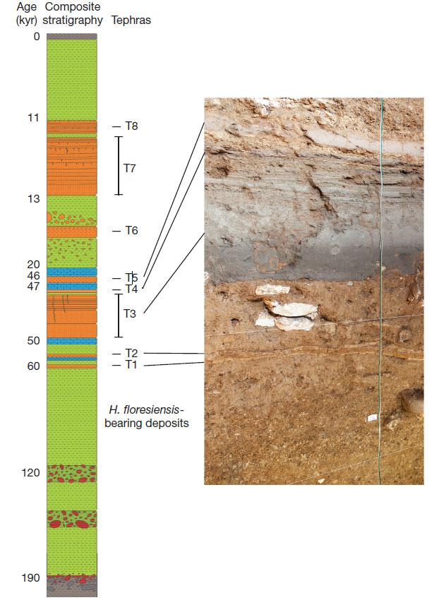 Схематический разрез отложений пещеры Лианг Буа. Т1-Т8— слои тефры. Останки Homo floresiensis залегают ниже слоя Т1. Слева показан примерный возраст слоёв (тыс. лет).