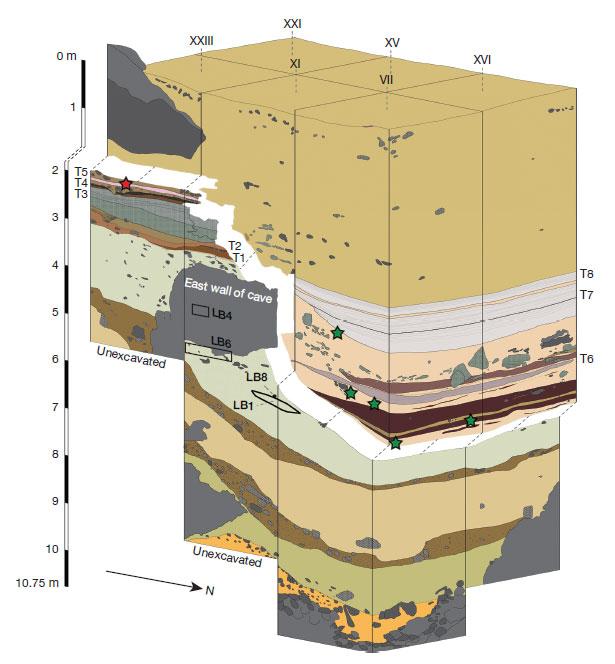 Стратиграфия раскопанного участка увосточной стены пещеры Лианг Буа (Liang Bua). Видно образовавшееся врезультате эрозии понижение, вкотором скопились более молодые отложения. Красная звезда— точка, откуда взят образец угля для датирования 14C (возраст 46тыс.л.н.). Зелёные звезды— точки, откуда ранее брали образцы для датирования радиоуглеродом.
