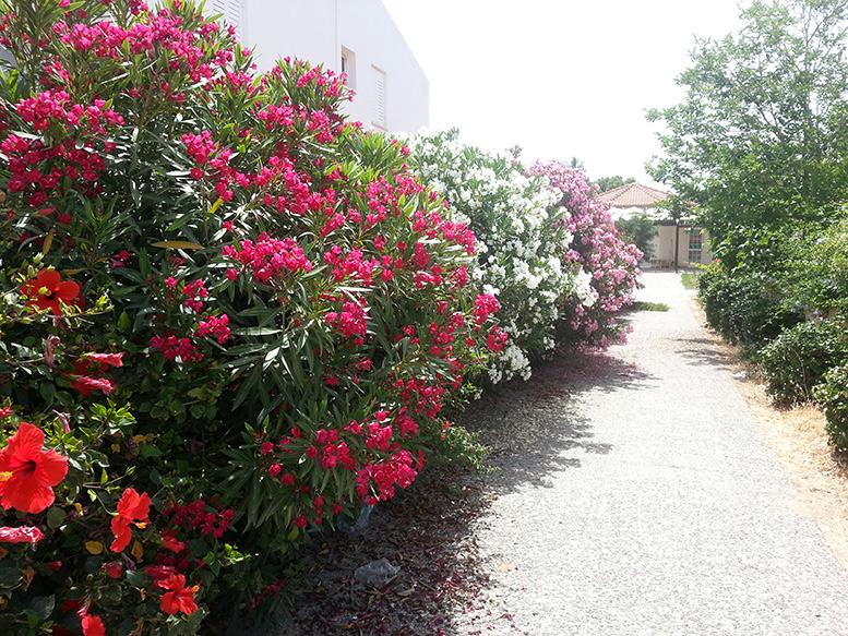 Проход между домами вгороде Пафос, Кипр. Фото автора