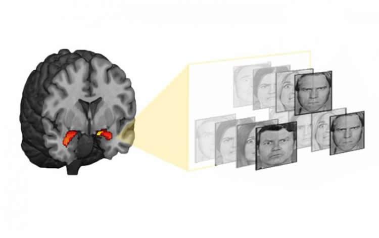Миндалевидное тело становится активнее, когда участник опыта видит фотографии пугающих лиц