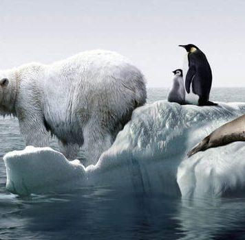 Учёные создали интерактивную карту таяния антарктических льдов
