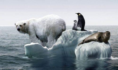 Вследствие глобального потепления, гренландский иантарктический ледяные щиты теряют массу испособствуют повышению уровня моря.