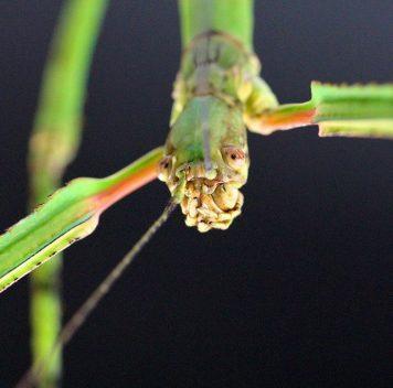 Самое длинное насекомое обнаружено вКитае
