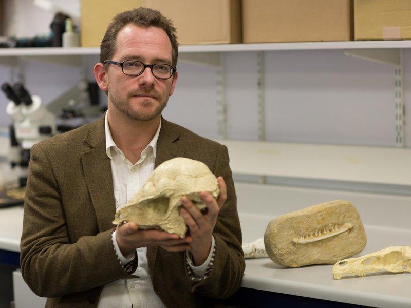 Соавтор исследования Ник Лонгрич счерепом вымершего млекопитающего, жившего вмеловом периоде