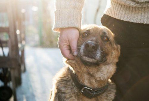 Собак одомашнивали дважды напротивоположных сторонах Евразии