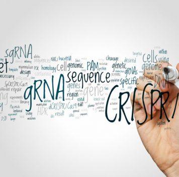 Новая CRISPR-система для генного таргетинга РНК