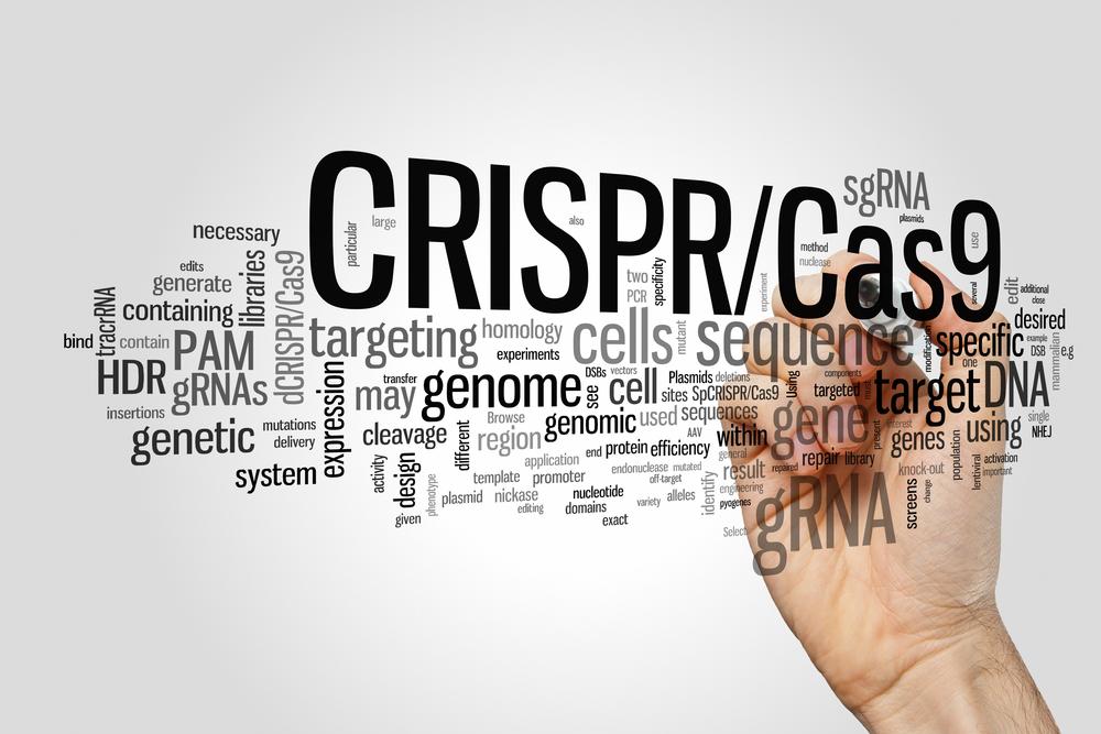 Если одобренный недавно RAC эксперимент по генетической модификации T-лимфоцитов окажется успешным, это может серьёзно приблизить человечество кокончательной победе над раком.