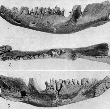 В конце мелового периода вымерли нетолько динозавры, но ипочти все млекопитающие