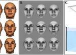 Учёные использовали набор из 62 европеоидных женских лиц. В ходе первого испытания (рисунок А) рыбы выбирали фотографии, на которых изображено не только лицо, но и характерная форма головы. Для второго эксперимента (рисунок B) фото отредактировали.