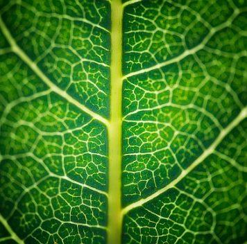 Бионический лист получает топливо из солнца, воздуха иводы