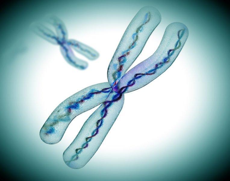"""X-хромосомы """"защищают"""" друг друга."""