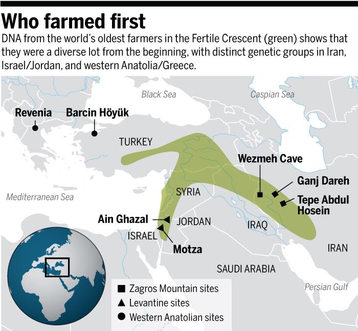ДНК древних фермеров говорит отом, что они отличались большим генетическим разнообразием. Существовали генетически различные группы вИране, Израиле иИордании, изападной Анатолии