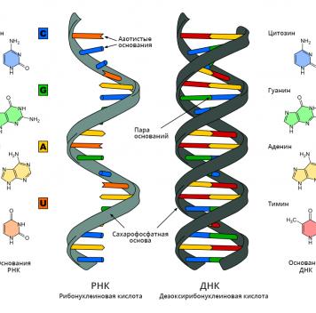 Учёные из МТИ разработали вакцину наоснове РНК