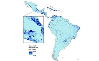 Карта вирус Зика прогноз