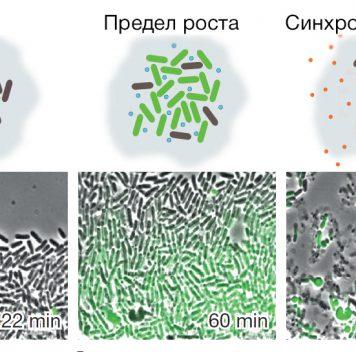 Бактерии-камикадзе борются сраком