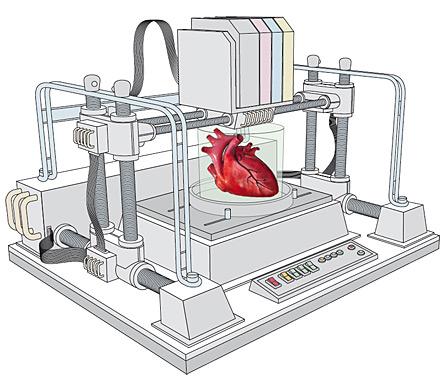В майбутньому планується друкувати різні органи, у тому числі і серце