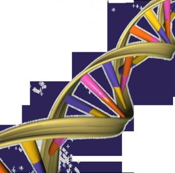 И всё-таки ДНК светится