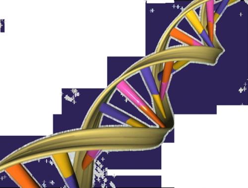 Спираль дезоксирибонуклеиновой кислоты.