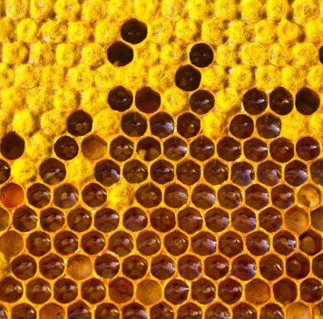 Не пережили прошлую зиму 12% пчелиных семей