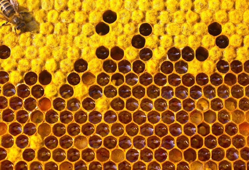 Пчеловоды 29 стран сообщили, что из почти 400000 пчелиных семей, которые им принадлежат, 11,9% неудалось пережить зиму.
