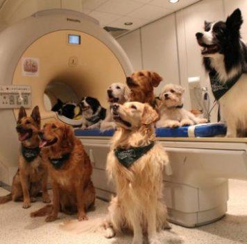 Собаки понимают как слова, так иинтонацию человеческой речи