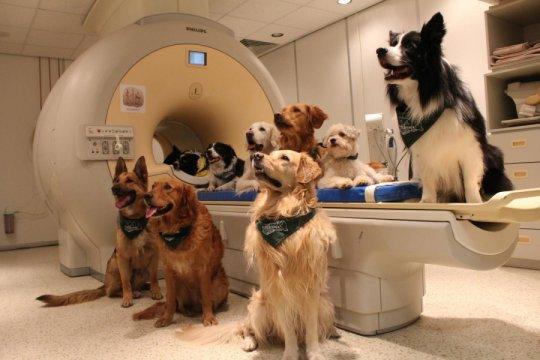 Собаки ифМРТ-сканер