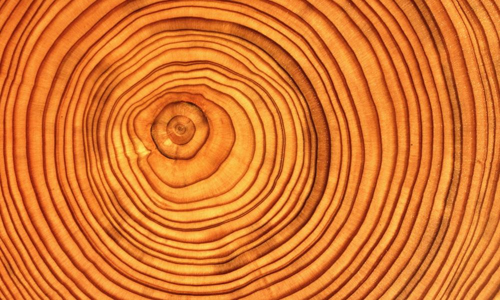 Годичные кольца дерева. Сравнивая последовательность колец деревянного артефакта, иобразцов, датировка которых известна, можно определить, когда был изготовлен предмет.