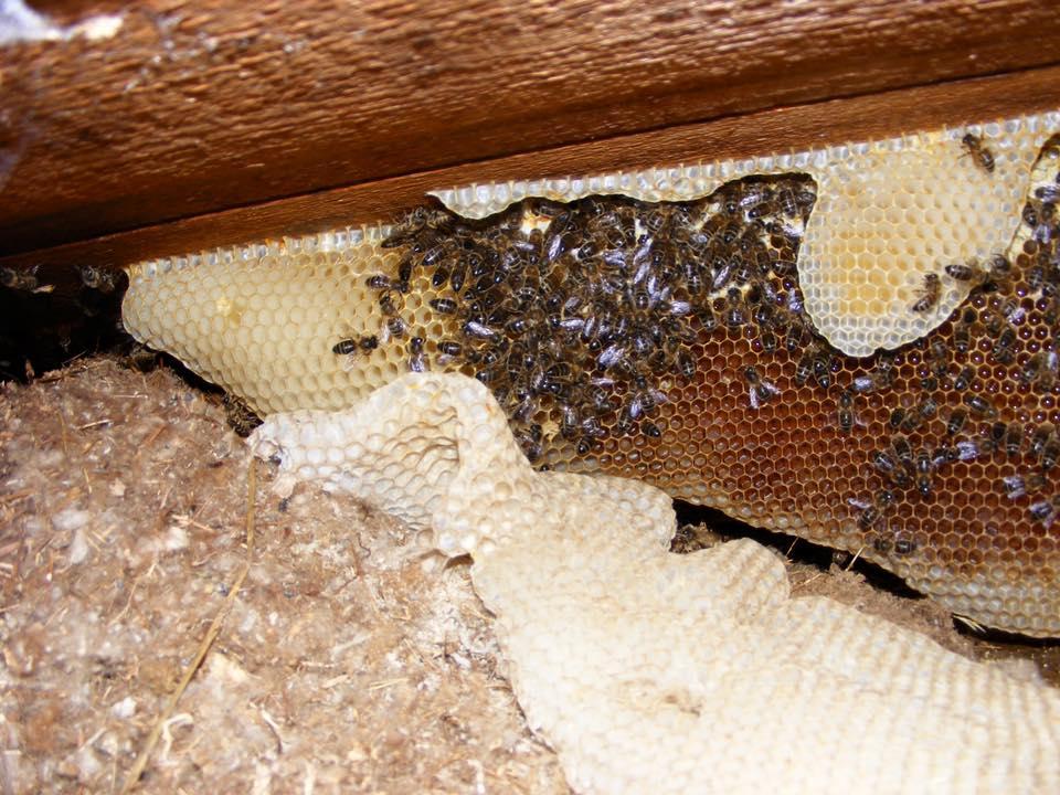 Пчелиные соты под крышей больницы вКардиффе.