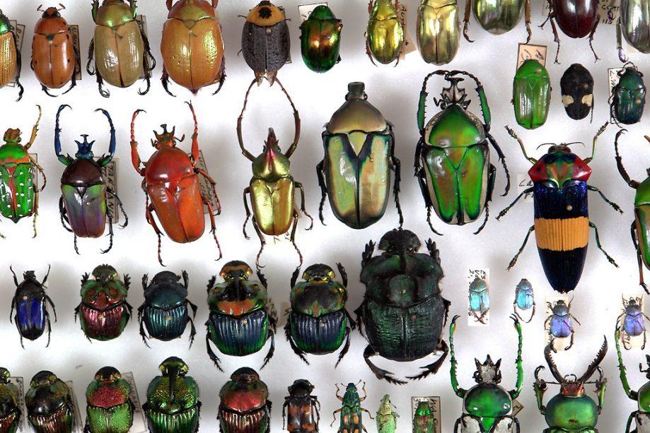 Жесткокрылые, или жуки (лат. Coleoptera)