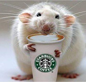Кофеин предотвращает ухудшение работы памяти