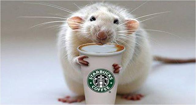 Учёные выяснили, почему кофеин предотвращает нарушения памяти. Вэтом им помогли грызуны— как обычно.