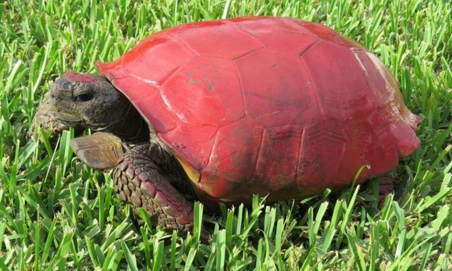 Преступно раскрашенная черепаха